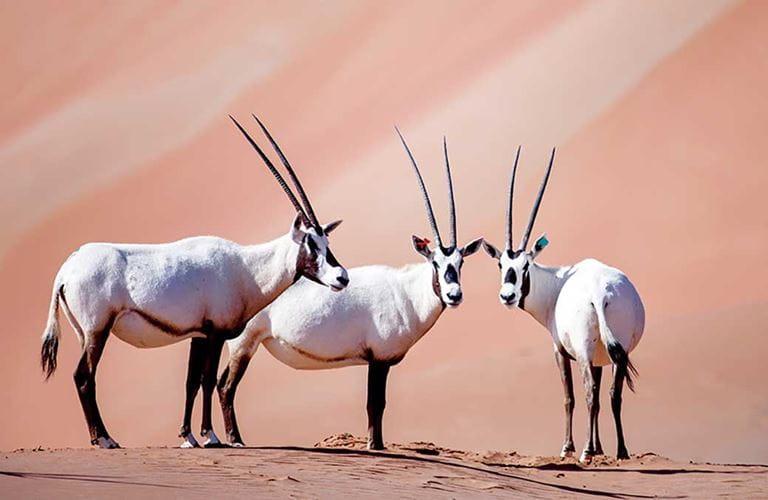 أرامكو السعودية.. يدٌ تُمِدُّ العالم بالطاقة ويدٌ تحمي البيئة