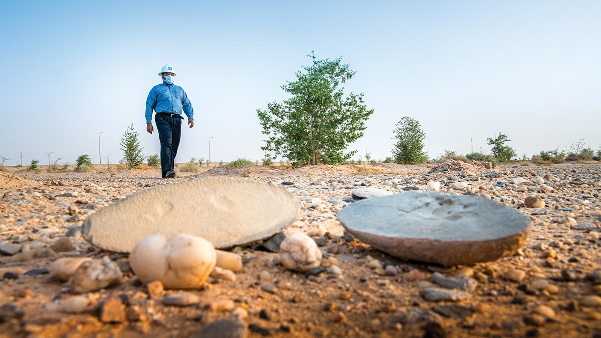 الشُجيرات تزيِّن الأرض في حرض