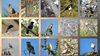 رصدٌ لبعض طيور شبه الجزيرة العربية