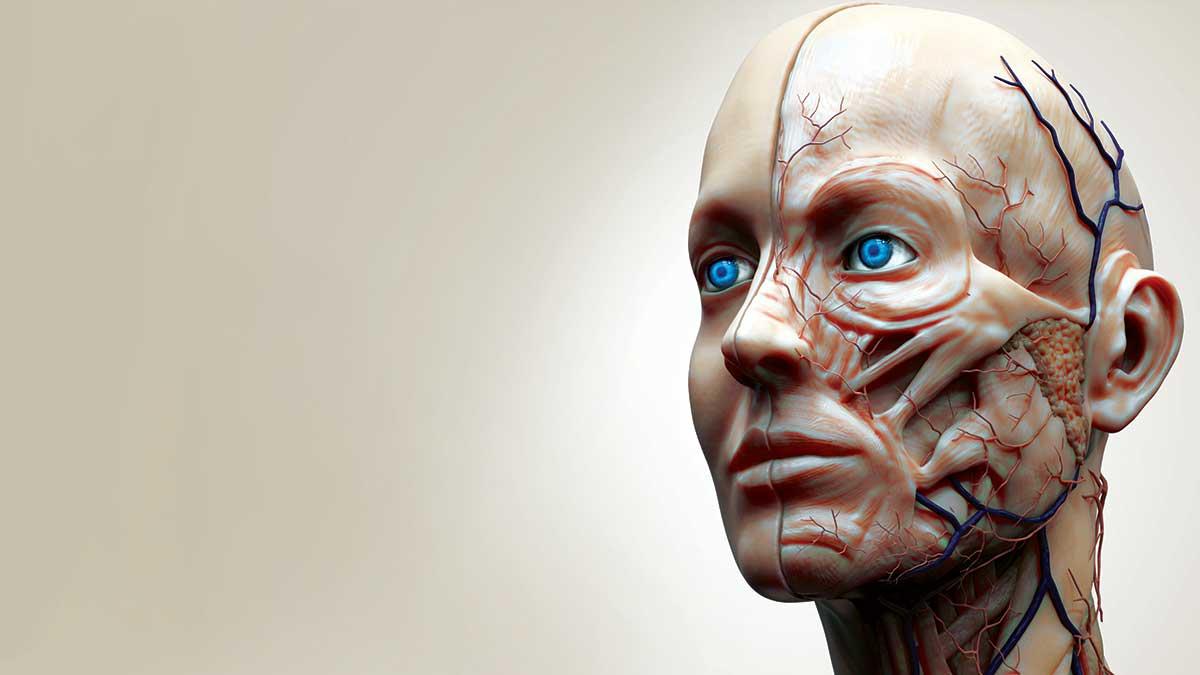 تعابير الوجه ... من النظريات إلى مجهر الدراسات العلمية