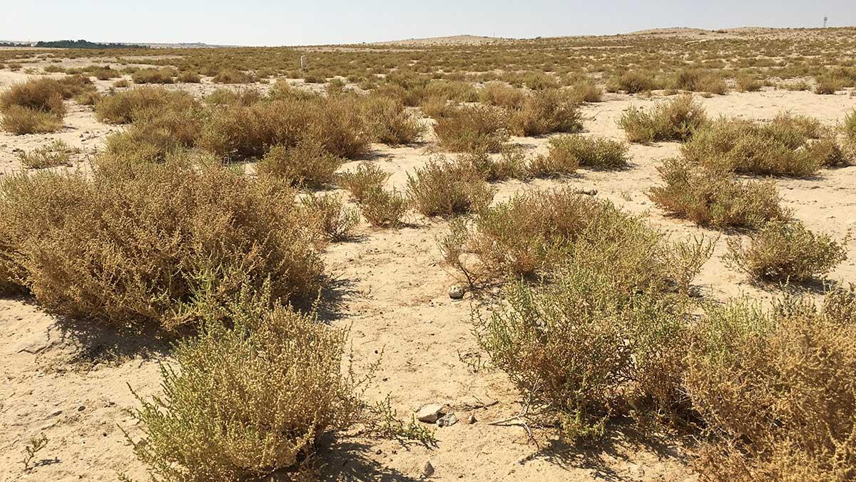رحلةٌ إلى منطقة ثاج.. استكشاف أسرار الصحراء برفقة دليل خبير