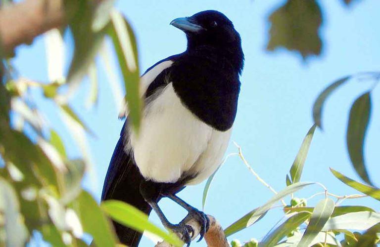 لقاءات حلوة مُرّة مع أحد أندر الطيور في العالم