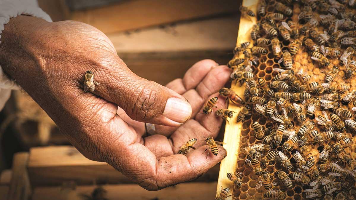 إطلاق مبادرة دعم صناعة العسل وتطوير منتجاته بالمدينة المنورة