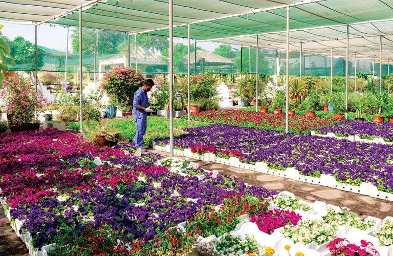 Launching the Green Communities Initiative and 2020 Flower Season