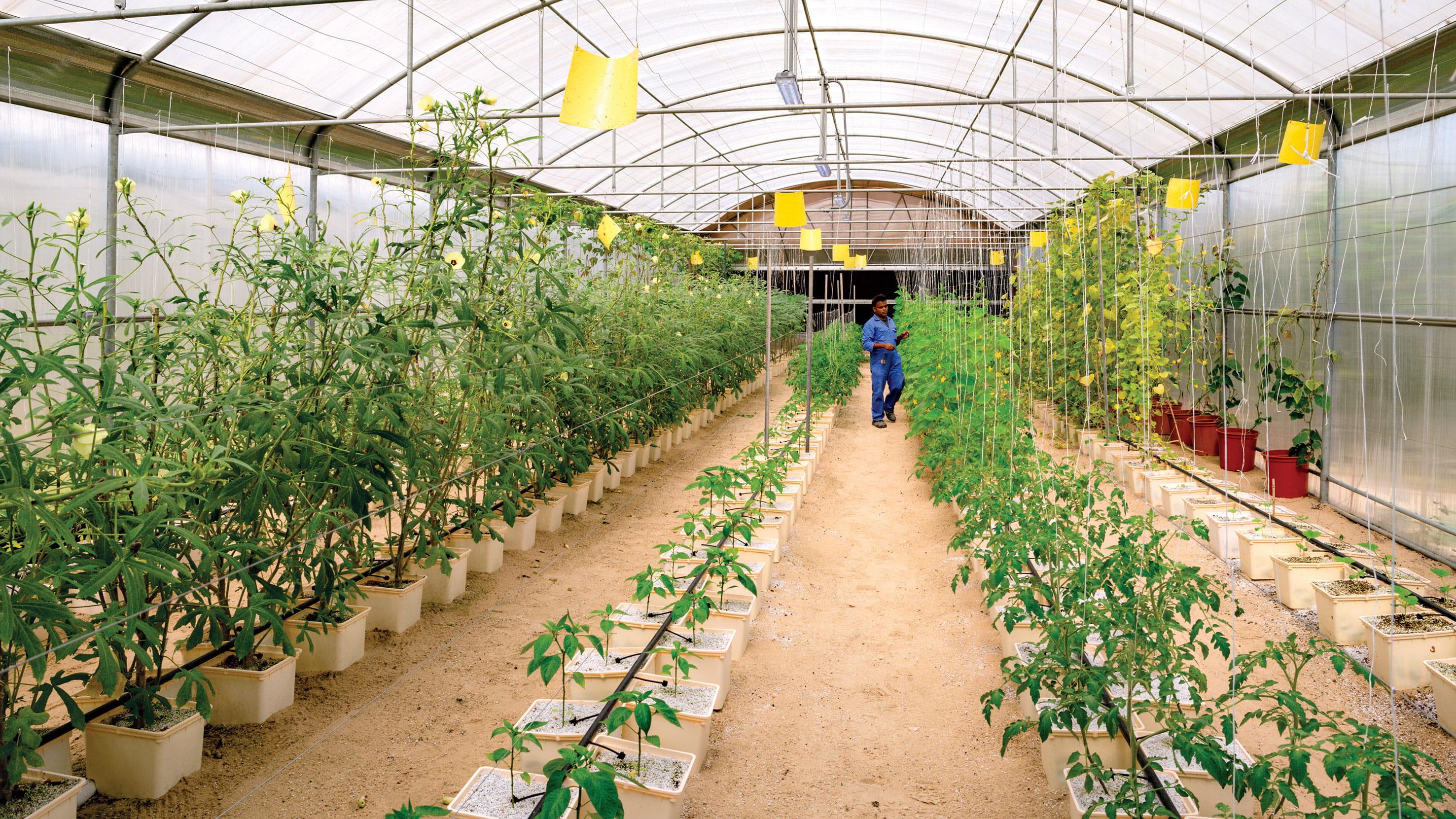 إطلاق مبادرة الأحياء السكنية الخضراء وموسم الزهور 2020