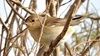Catch the action at Al Ahsa's birdwatching hotspots