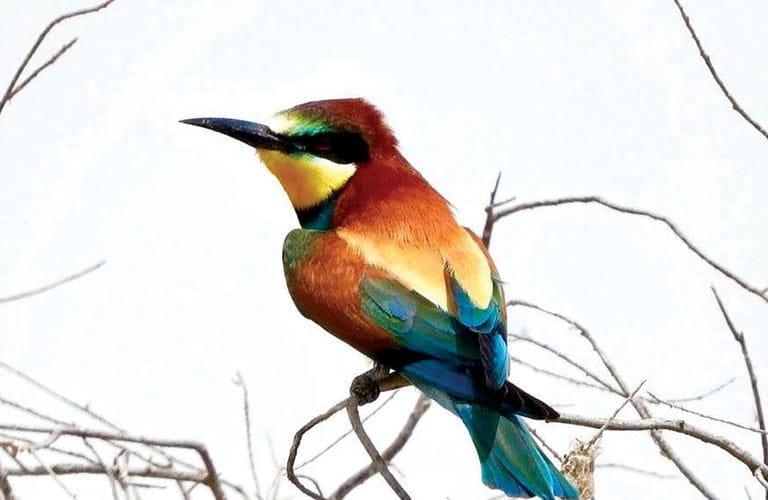 الطيور المهاجرة تحلِّق في سماء المملكة في طريقها نحو الدفء