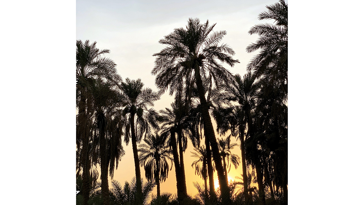 Readers Album: Palm Trees at Sunset