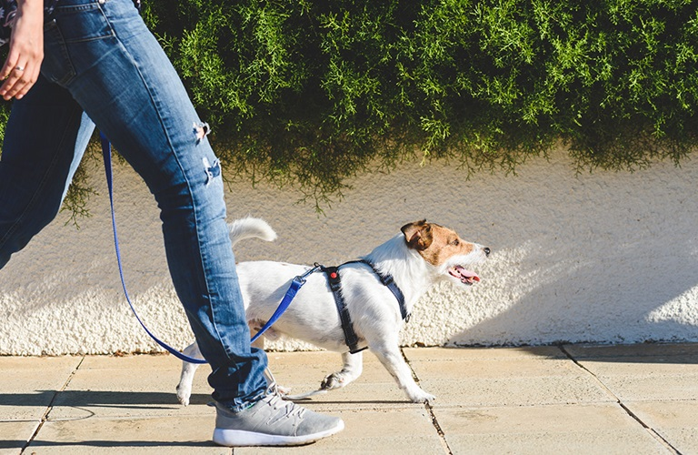 Dog safety: Paws and reflect on your action
