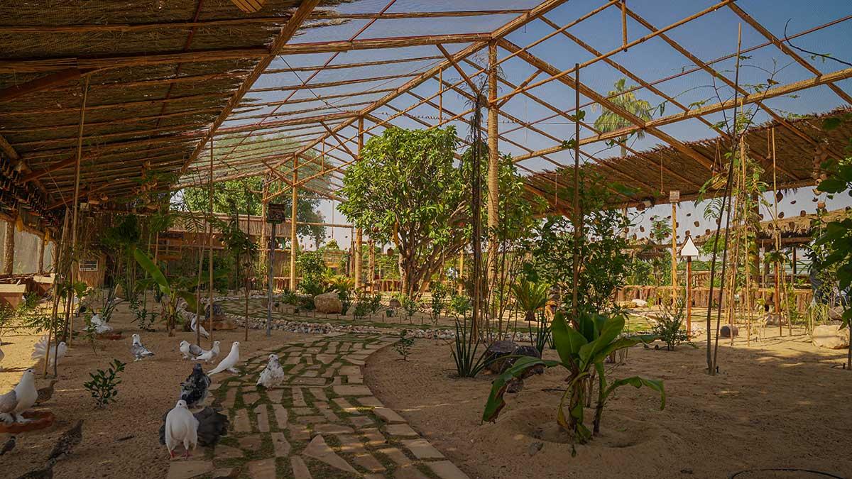 Abqaiq Heaven gives Friendly City a greener hue