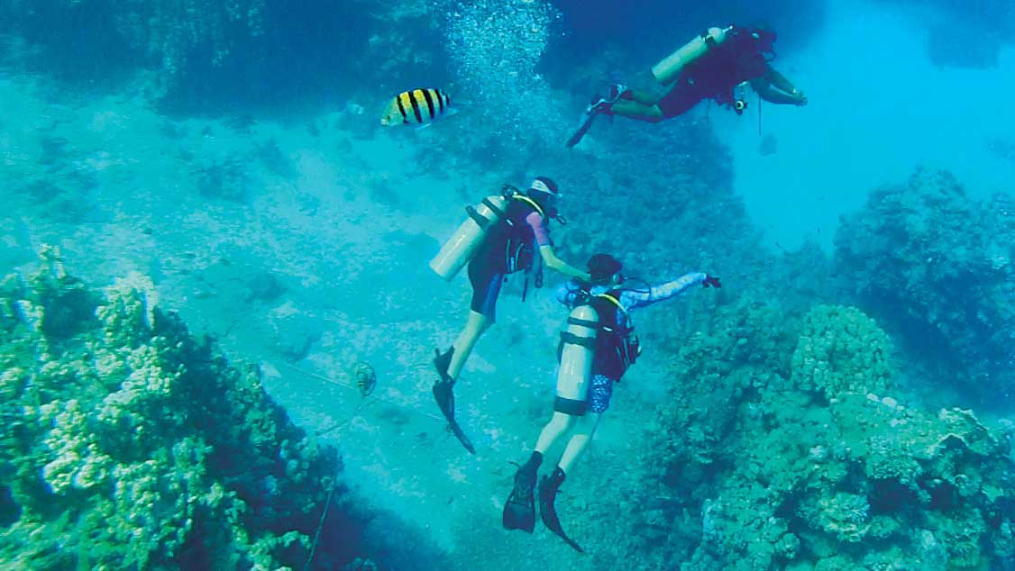 Dive in and discover the wonders of an underwater world