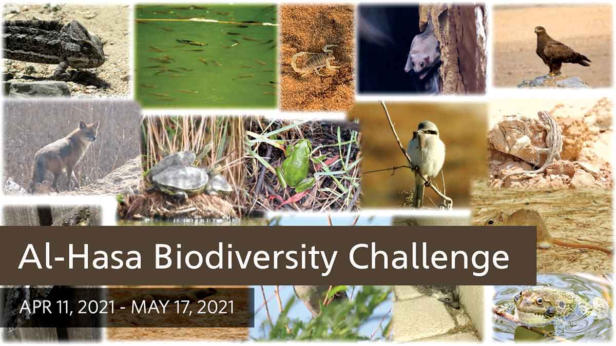 Aramco industrial trainees become citizen naturalists in biodiversity challenge