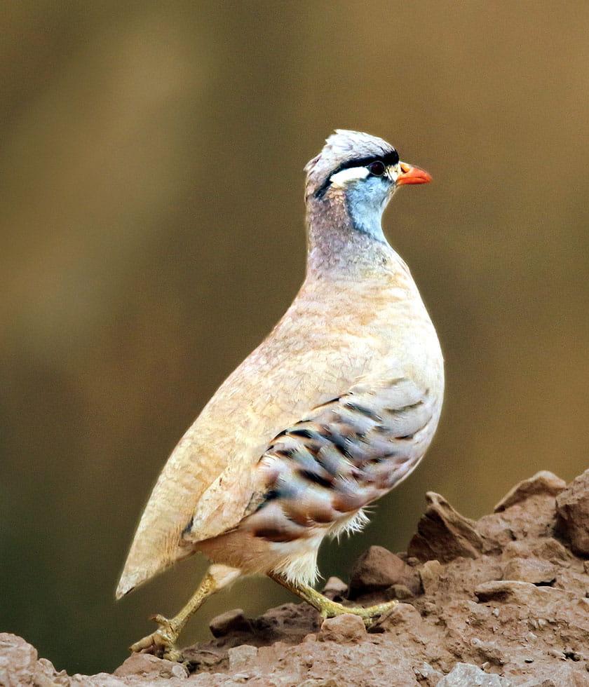 Saudi's first Big Day of Birding